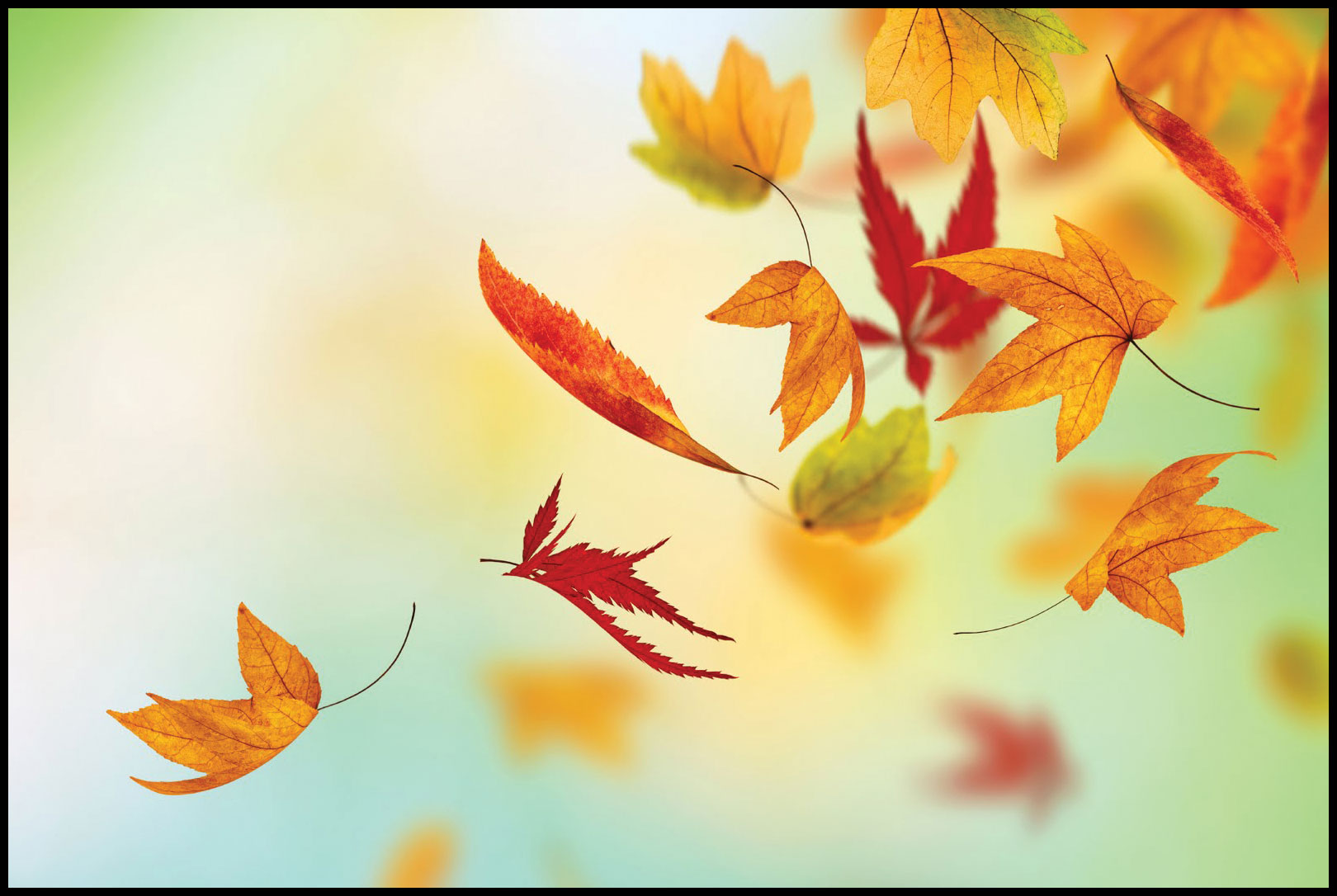 fall | No Time But the Present