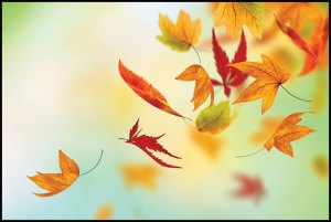 autumn-leaves-falling-bkgd